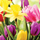 Flowers for Easter and Spring Plant Fundraisers